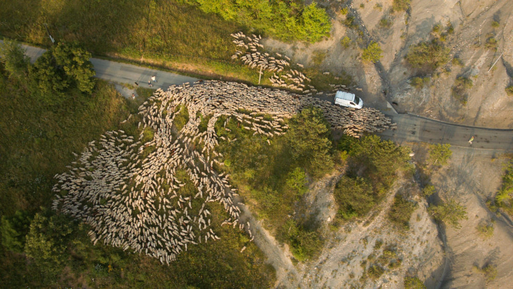 1750 Schafe aus der Luft